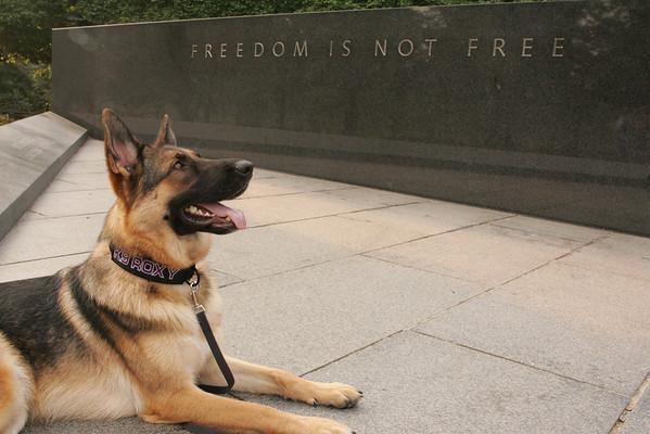 Freedom's Gaze